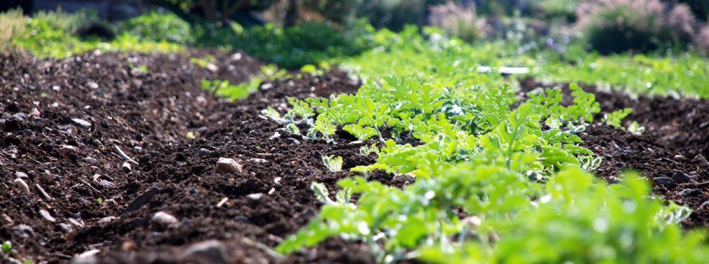 corona_agriculture-1340×500